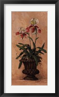 Orchid Revival ll Framed Print