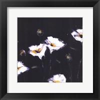 Framed Preening Poppies