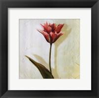 Framed Tulip III