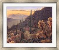 Framed Sonoran Sunset