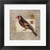 Traveler Bird IV Framed Print