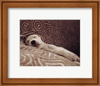 Framed Dog Tired