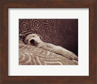 Framed Dog Tired