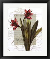 Framed Florilegium III