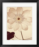 Framed White Clematis