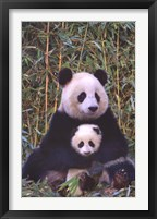 Framed Panda And Baby