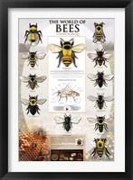 Framed World Of Bees