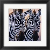 Framed Zebres de Gol