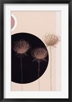 Framed Three Dandelions on black circle