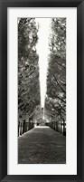 Framed Palais Royal - Paris - France
