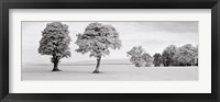 Framed Edzell - Scotland