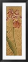Framed Iris Elegance I