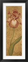 Framed Iris Elegance II