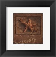 Framed Serenity - starfish