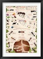 Framed Ants