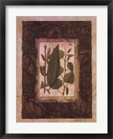 Framed Leaf Study I