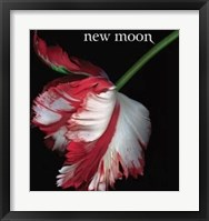 Framed Twilight 2: New Moon (Book Cover)