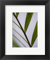 Fragile Green Framed Print