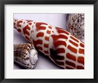 Linen Shell Collage Framed Print