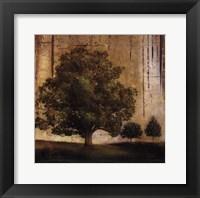Aged Tree II Framed Print