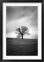 Framed Twin Oaks III
