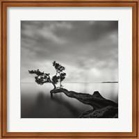 Framed Water Tree
