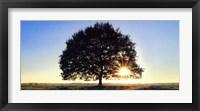 Framed Lonely Tree in De Hoge Veluwe, the Netherlands