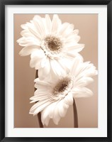 Framed Two Daisies