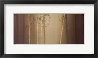 Framed Warmingham Wood