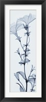 Tall Petunia Framed Print