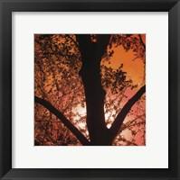 Sunset Forest I Framed Print