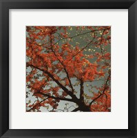 Sunset Forest II Framed Print
