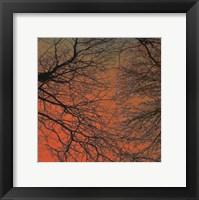 Sunset Forest III Framed Print