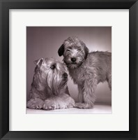 Ruff & Daisy Framed Print