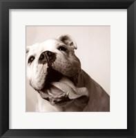 Luca Framed Print