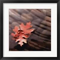 Framed Leaves in Stream