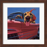 Framed Dog About Town