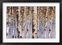 Framed White Forest I