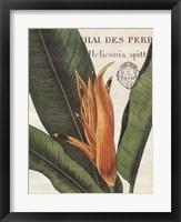 Framed Botanique Tropicale II