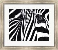 Framed Black and White II