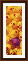 Framed Quack Quack II
