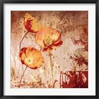 Framed Poppy Heat II