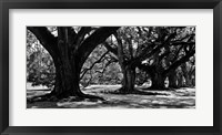 Framed Photography II