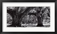 Framed Photography I