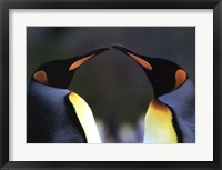 Framed King Penguins