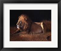 Framed Lying Lion