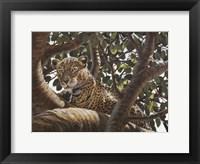 Framed Serengeti Leopard
