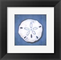 Framed Sand Dollar
