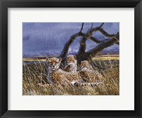 Framed Cheetah and Cubs