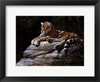 Jaguar on Rock Framed Print